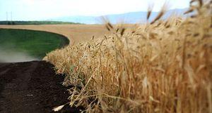Грант на развитие сельского хозяйства в 2017 году: как правильно его получить начинающим фермерам