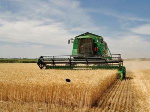 Документы для предоставления субсидий для сельского хозяйства