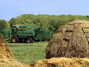 Государственные программы по сельскому хозяйству молодому фермеру 2020