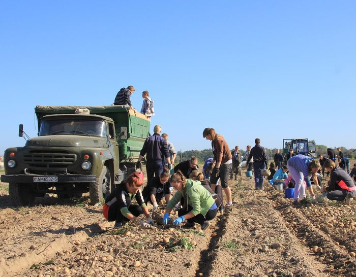 Условия предоставления субсидий для сельского хозяйства
