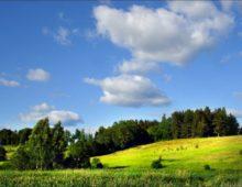 Способы и правила как узнать очередь на получение земельных участков многодетными семьями